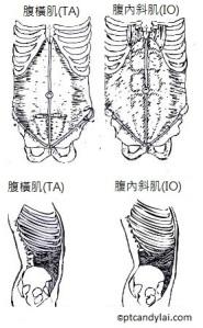 TA illustrations