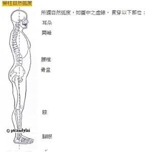Diagram - spine neutral alignment
